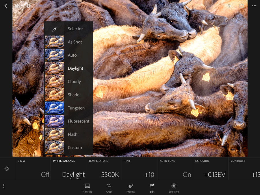 Developing a photo in Lightroom mobile