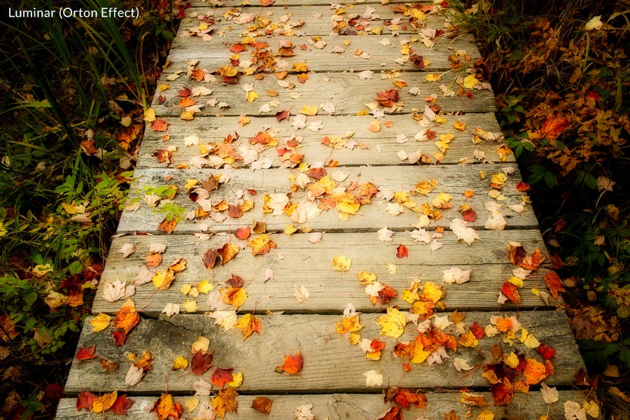 Photo of autumn leaves on boardwalk processed in Luminar with Orton Effect