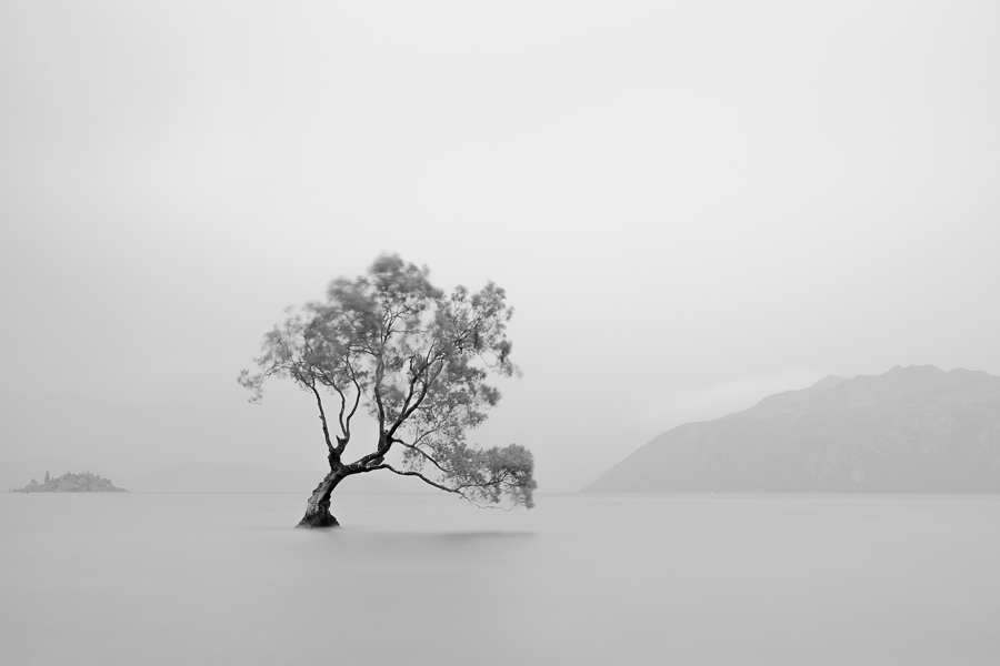 Long exposure black and white landscape photo of the Wanaka Tree in New Zealand