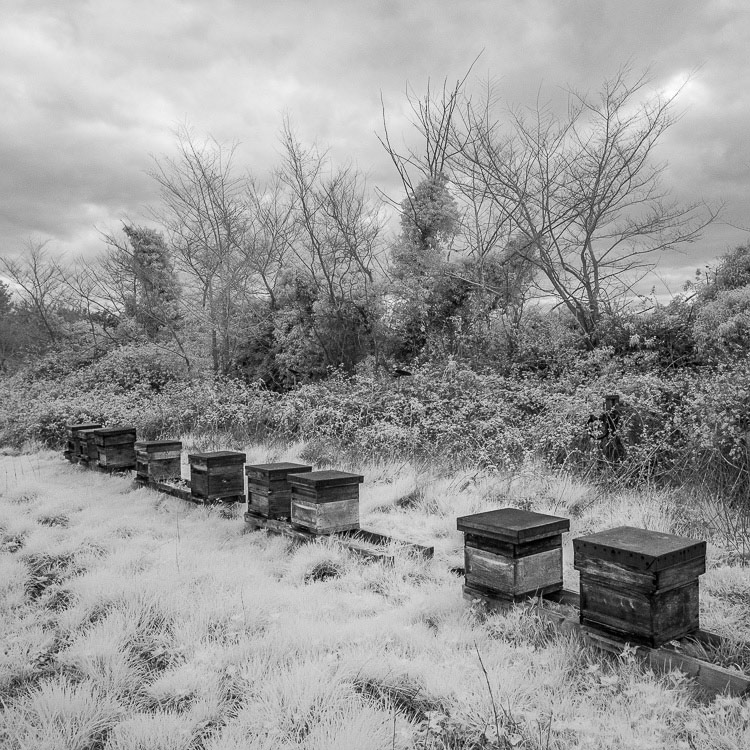 Black and white photo of beehives in a field taken with a Fujifilm X-Pro 1 camera converted to infrared