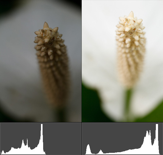 Photos of white flowers with histograms