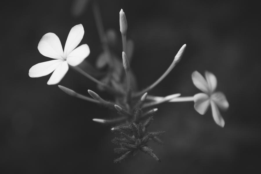 Balance in flower photo