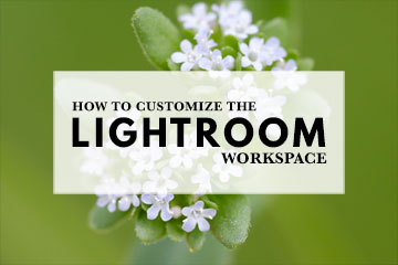 How To Customize The Lightroom Workspace