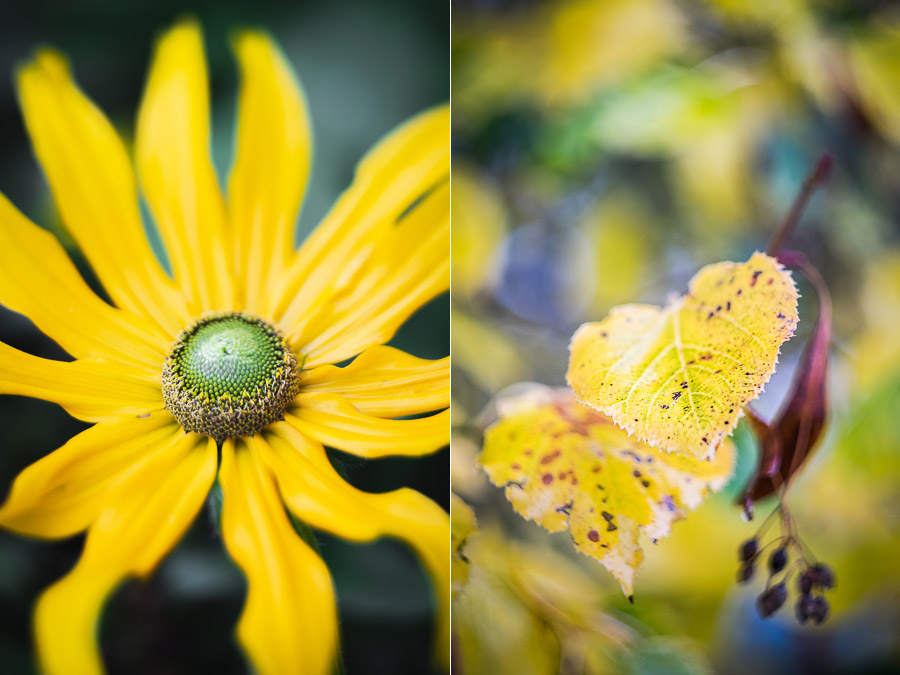 Photos of flowers made with extension tubes