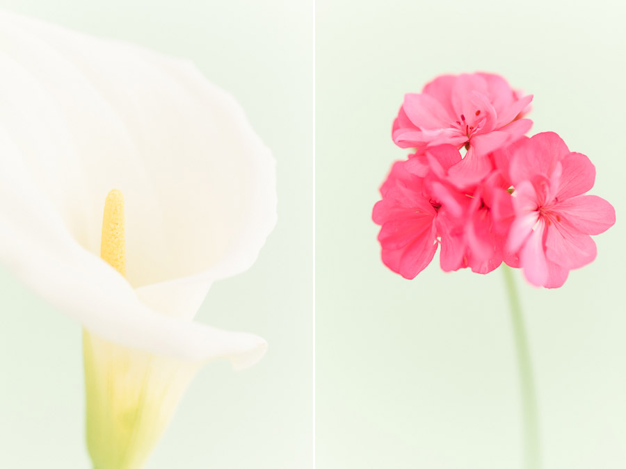 High key flower photos