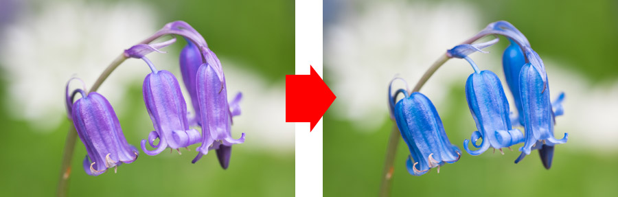 Lightroom Classic Develop module image comparison