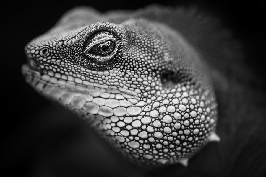 Untoned black and white photo